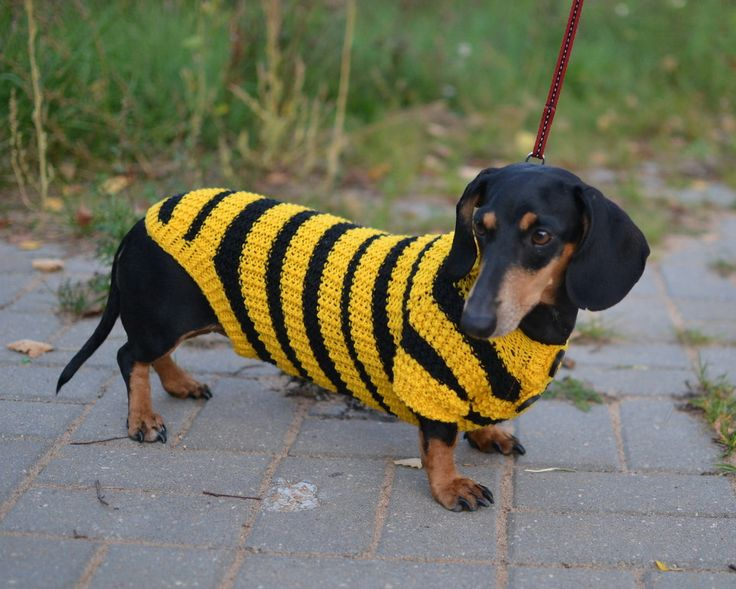 Bee Dog Sweater Clothes Hand Knitting dachshund. $35.00, via Etsy.