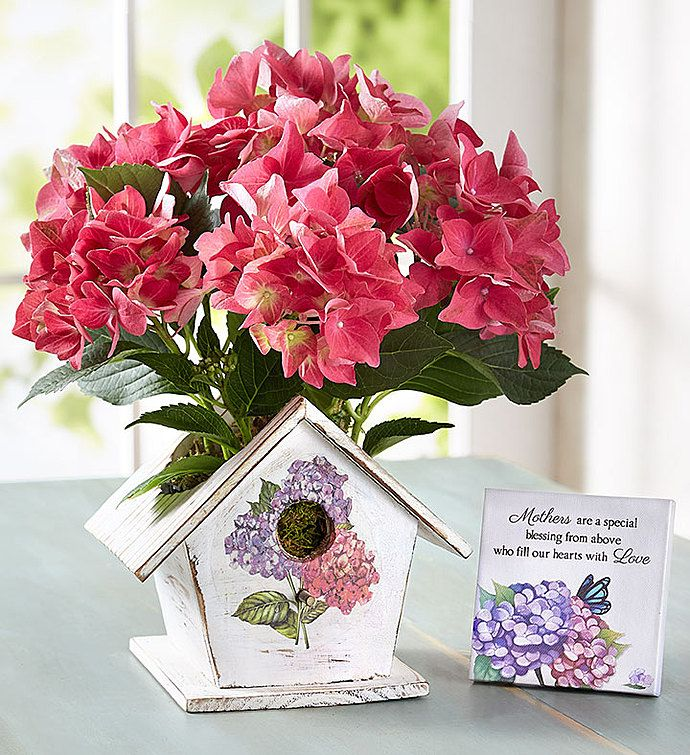 Bird House Of Blooms Potted Trees Plant Gifts Summer Flowers To Plant