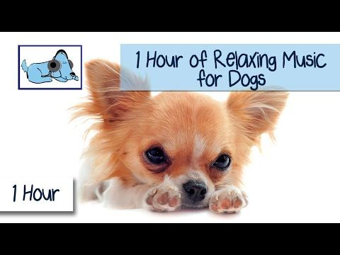 1 HOUR of Relaxing Music for Dogs, Music for Dogs and Fireworks - YouTube