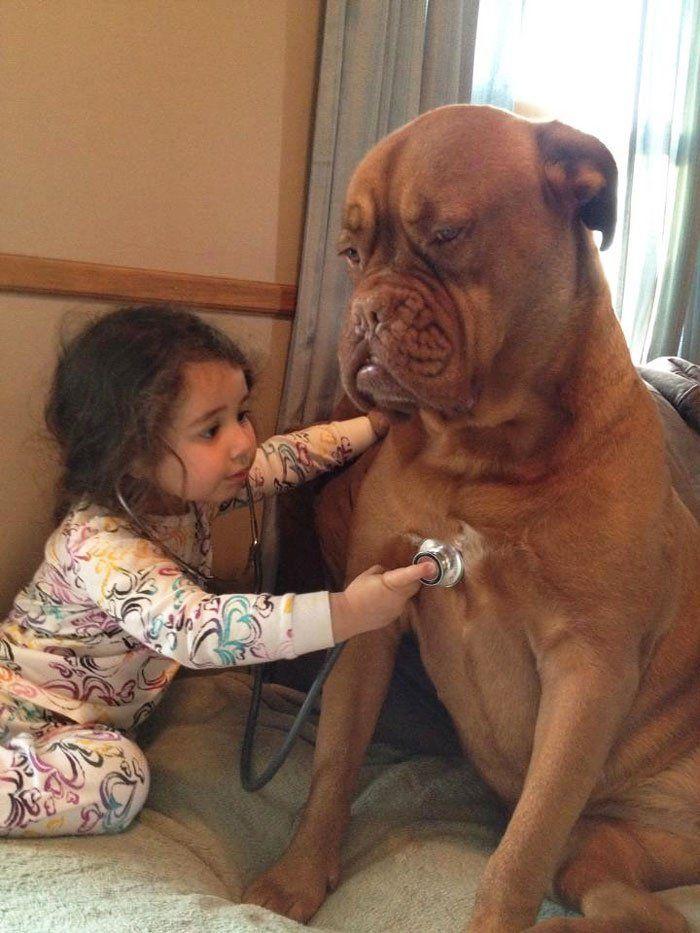 Bébés et Grands et/ou Gros Chiens - Malgré leur apparence parfois redoutable, les races de chiens plus ou moins grandes font de bons compagnons pour les enfants, en leur offrant amour et protection.