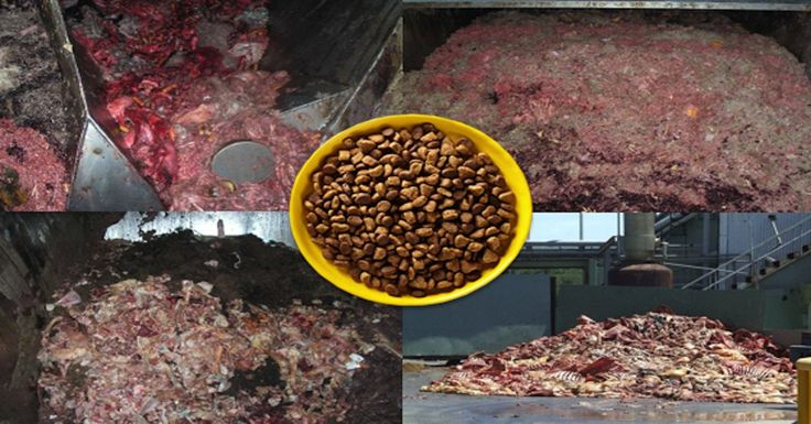 List Of Worst Dry Dog Foods