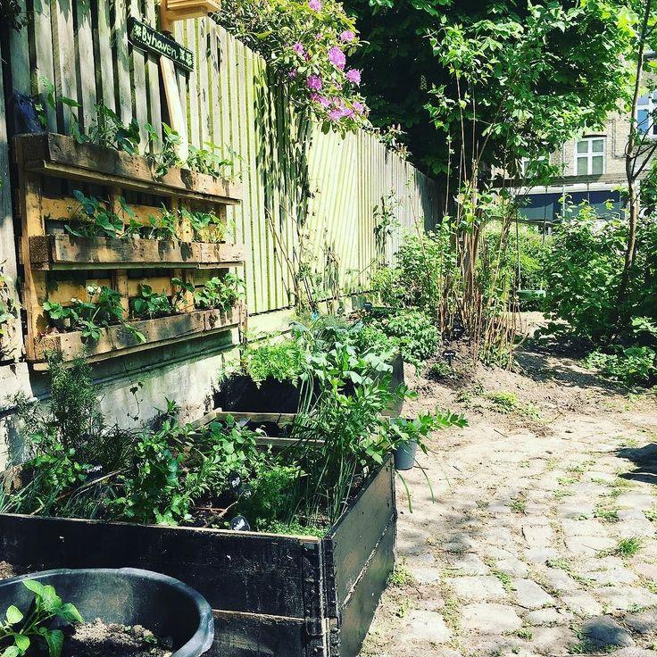 Backyard happiness  #urbangardencompany #urbanfarming #urbangarden