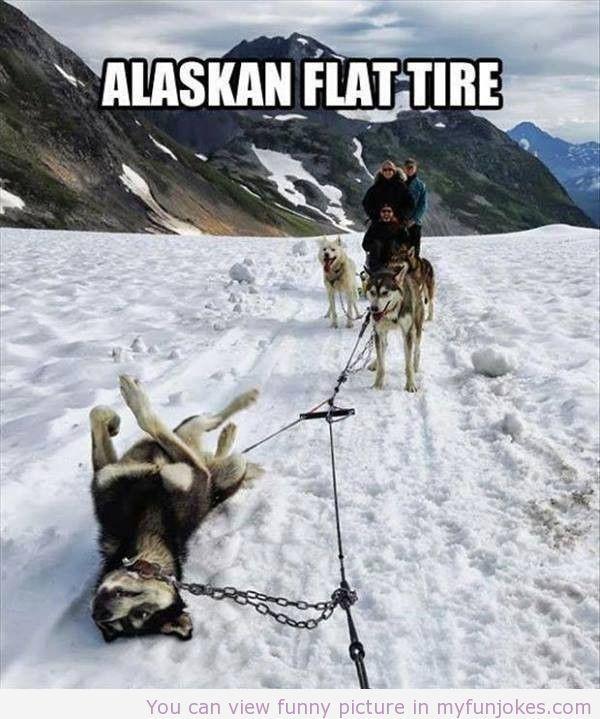 Alaskan flat tire — funny kid jokes - http://www.myfunjokes.com/funny-jokes/alaskan-flat-tire-funny-kid-jokes/ funnypics #funnyanimal #dog #haha #cute