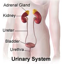 Secondary Adrenal Insufficiency causes, signs and symptoms, how it's diagnosed, how it's treated.