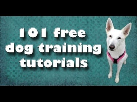 "Best Collection of Training Videos!  kikopup, the fantastic trainer, created an easy to search list of all her excellent tutorial videos.  you can find it on her website.  watch this video to learn more and click on ""more info"" to see her website url."