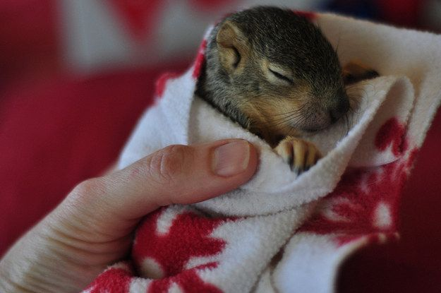 This SUPER snuggly squirrel. | 41 Pictures That Will Give You All The Feels