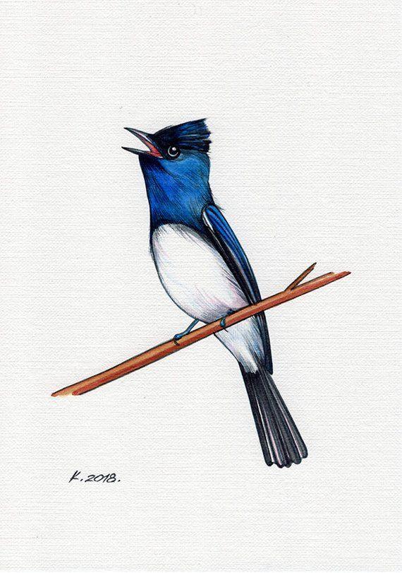 Satin Flycatcher Bird White Blue Black Watercolor Original Painting Art Quick Sketch Watercolor Bird Original Paintings Bird