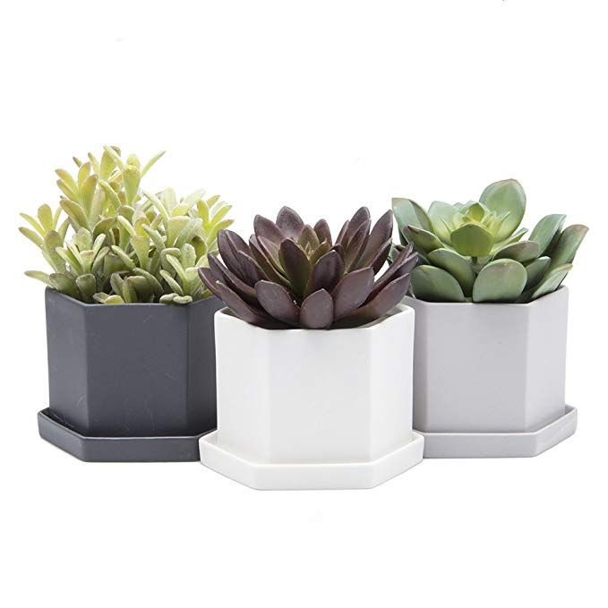 Chive Hexi 4 Hexagonal Succulent And Clay Pot And Saucer Planter With Drainage Hole And Saucer Bulk 3 Pack Tray And Dish B Succulents Planters Clay Pots