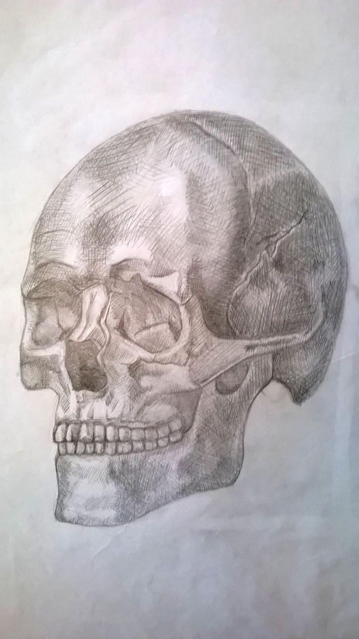 Studio di un teschio, matita - Skull study, pencil