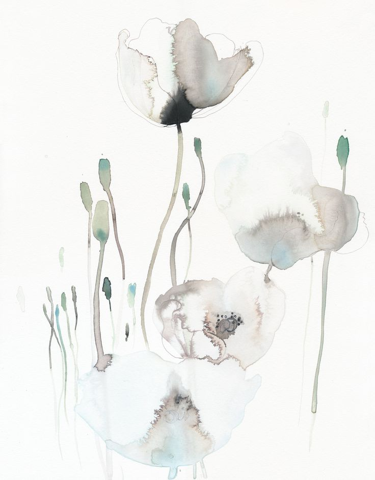 White poppies Watercolor, akvarel, flowers, art