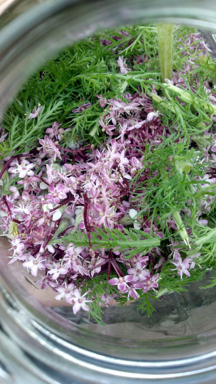 Elder flower for the flu | Wild Eats | Pinterest | Flu and Flower