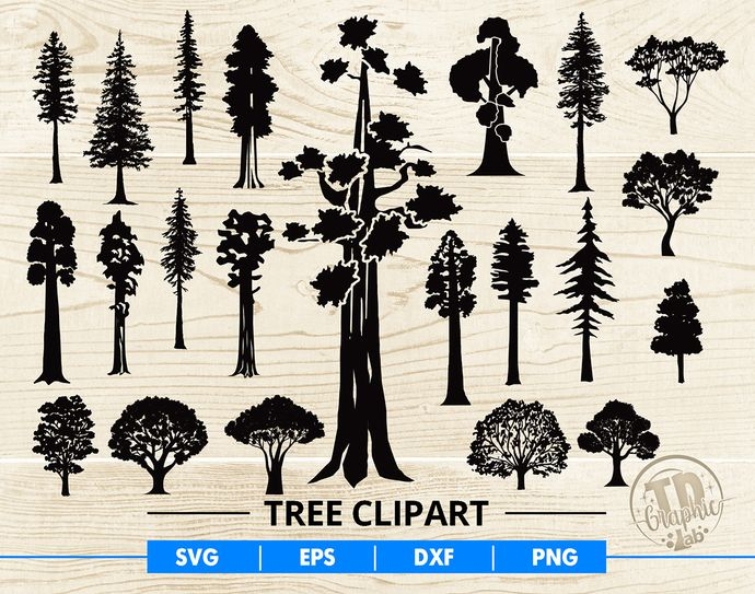 Tree Clipart Svg Bundle Giant Sequoia Tree Giant Redwood Tree Clipart Files Png Eps Dxf Svg Files For Cricut Tree Clipart Sequoia Tree Giant Sequoia Trees