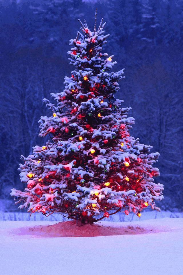 Outdoor Christmas Tree With Lights.Outdoor Christmas Tree With Lights And Snow Christmaslights