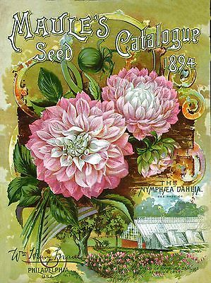Vintage Seed Catalog Cover 1894