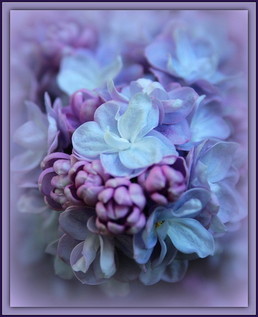 Lilac...Dresses Brides, Bizler Sunduğu, Lwed Dresses, Dresses Collection, Eye Feelings, Demirag Hanimefendinin, L Wedding Dresses, Ray Bans Sunglasses, Hanimefendinin Bizler