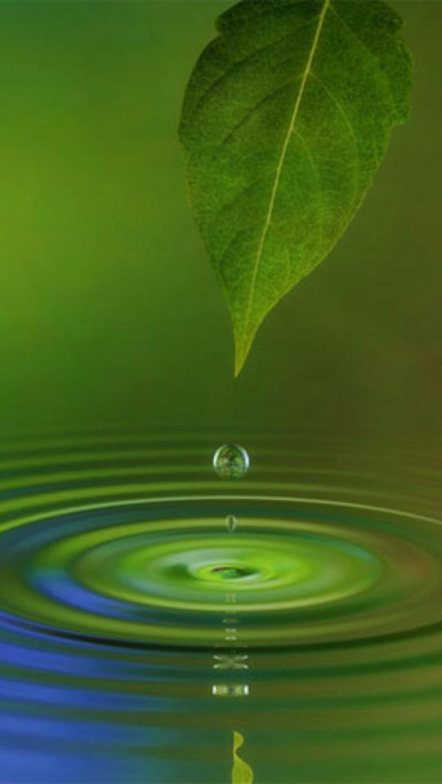 Water, Leaf, Nature