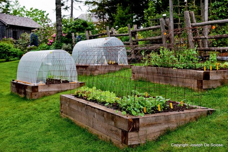 Raised Bed Vegetable Gardens On Hillside