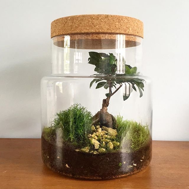 17 meilleures id es propos de terrarium bocaux sur. Black Bedroom Furniture Sets. Home Design Ideas