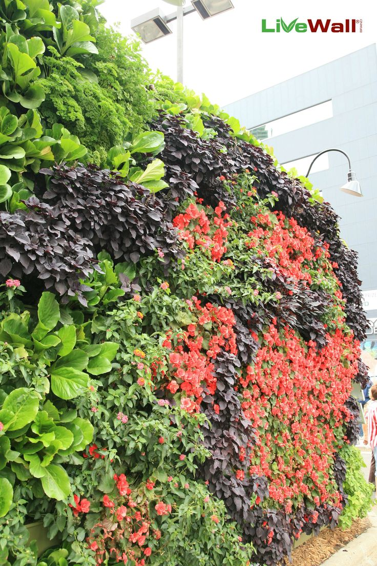 58 best living walls images on pinterest living walls green walls
