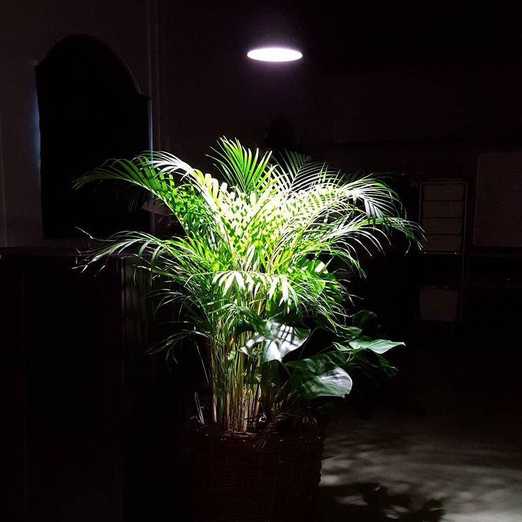Satsa på bra växtbelysning i vinter. T.o.m söndag 19/11 får du en gratis fröpåse noga utvald för varje Plant Light Primula-lampa du köper. Och varför inte komplettera med den snygga armaturen Saga! Lys upp med still och klass  #växtbelysning #inomhusodling #inomhusväxter #Wexthuset #plantlightprimula #belysning #indoorgardening #urbangardening #vinter #växter #plantor #prydnadsväxter #växthus #orangeri #köksodling #odlahemma #allakanodla #odla #odling
