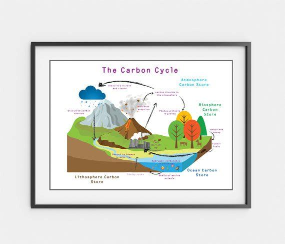 Printable Chemistry Cycles Posters Carbon Cycle Nitrogen Cycle And The Water Cycle Carbon Cycle Nitrogen Cycle Science Poster