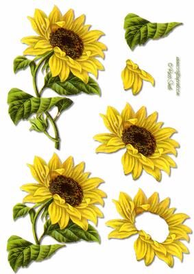 Sunflower Decoupage on Craftsuprint designed by Russ Smith - Decoupage sheet using a restored vintage image of a sunflower. Matching backing available. - Now available for download!