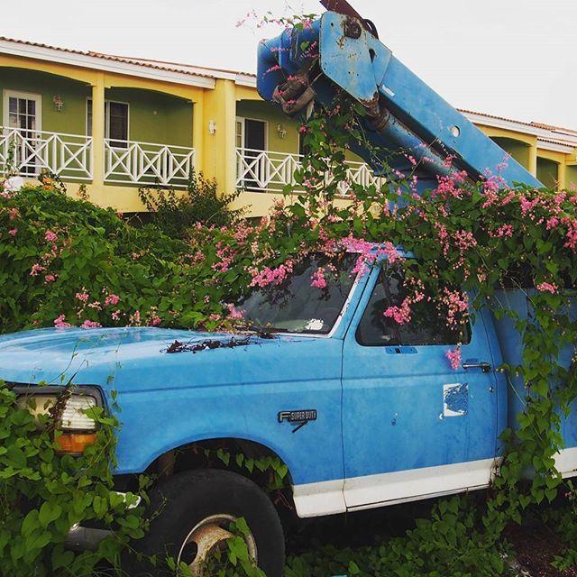 Parking in Willemstad - der wird wohl niemanden mehr abschleppen 😉 parkeren op een andere manier in Willemstad ⚠  #parking #parken #parkeren #bloemen #blumen #irgendwasmitblumen #flowers #abschleppdienst #takelbedrijf #willemstad #curaçao #curacao #rightnowincuracao #niederländischeantillen #nederlandsantillen #netherlandsantilles #abcinseln #abceilanden #karibik #caribbean