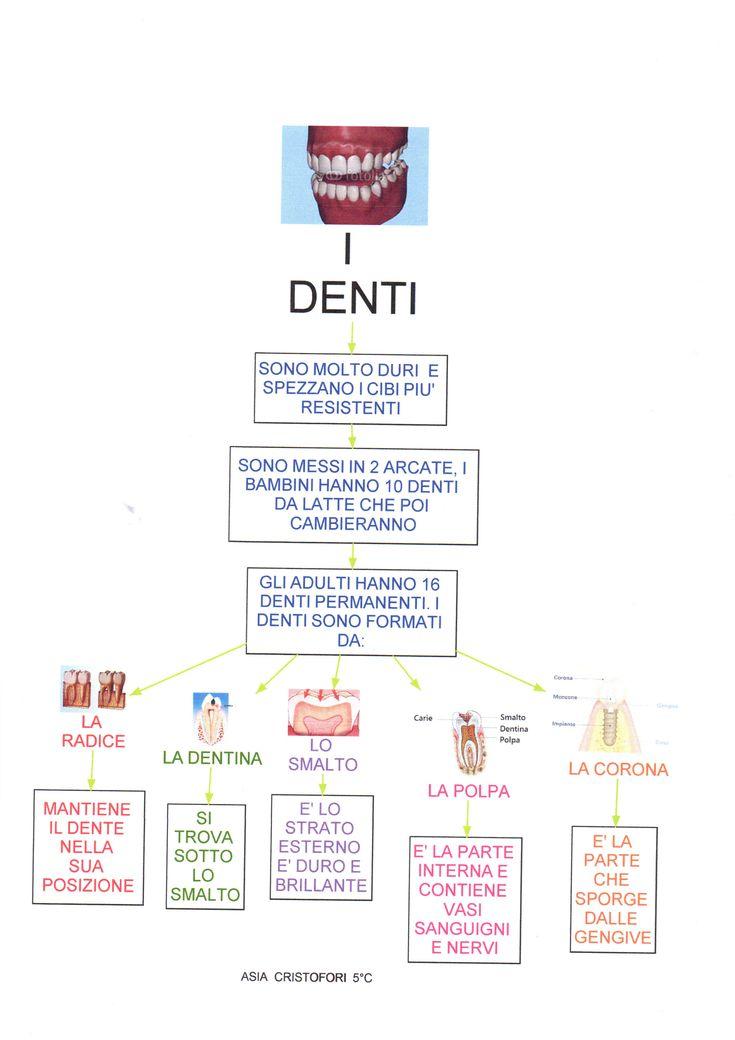 Mappa scienze: Denti