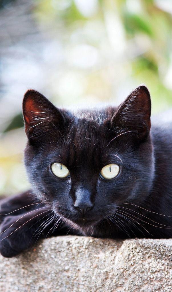 .... black cat....