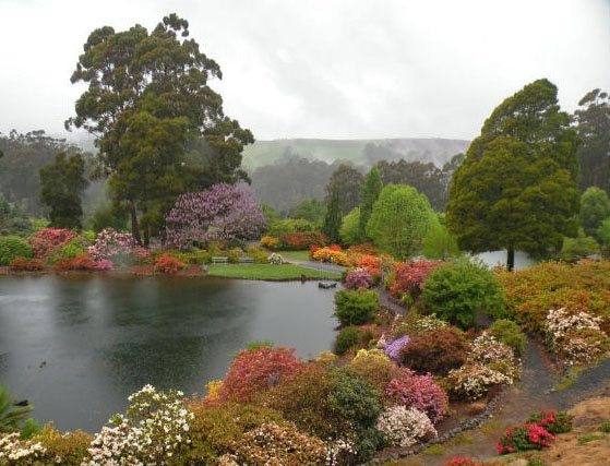 Emu Valley Rhododendron Gardens. Article and photo by Wayne and Julie Cartwright for www.think-tasmania.com