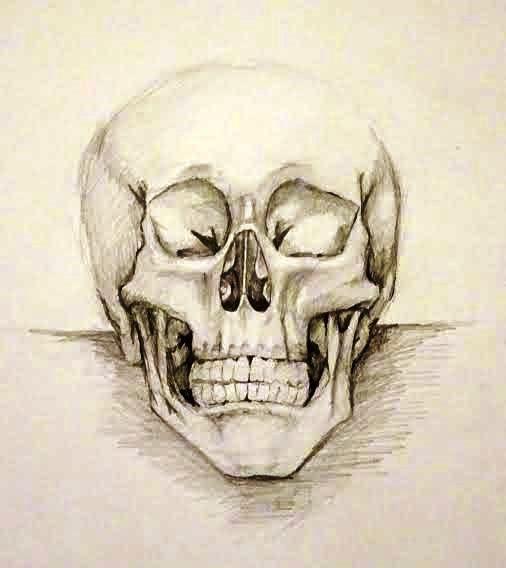 koponya tanulmány