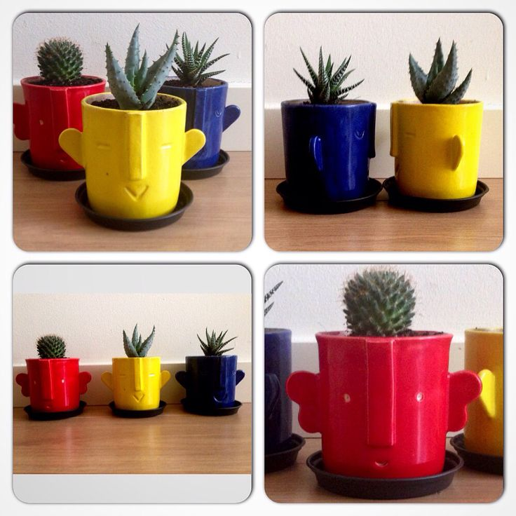 2016 Spring time new designs, flower pots cactusmania on sale :)