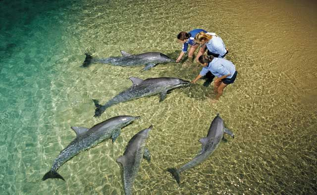 Tangalooma 2 or 3 Day Wild Dolphin Resort Adventure - sunrover.com.au