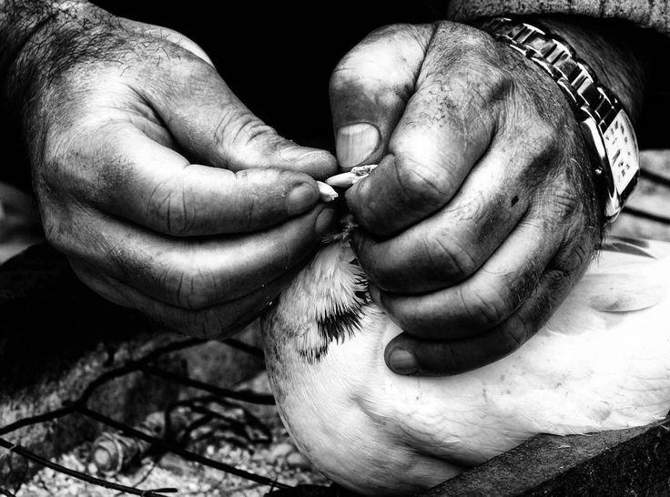 Las manos que ayudan son más nobles que los labios que rezan. by loreninhalopez