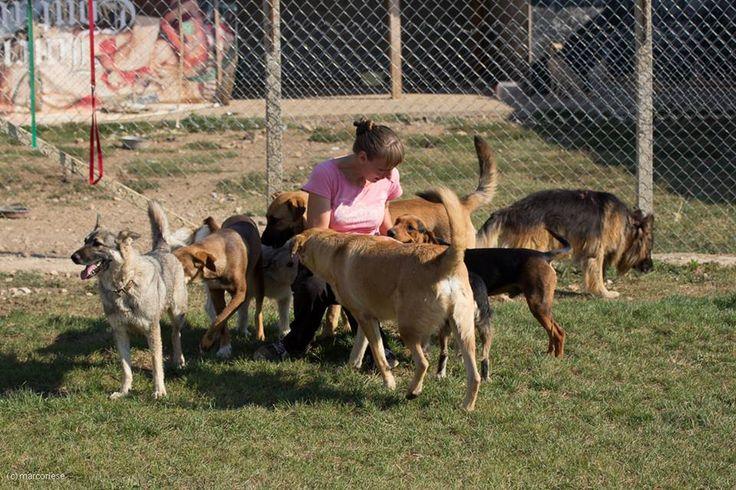 Wir sind einer der wenigen Vereine in Bulgarien, die rechtlich, auch nach dem Inkrafttreten der Gesetzesänderung, ab dem 1.8.2014, weiterhin Tiere nach Deutschland verbringen dürfen. Wir haben die dazu nötige Erlaubnis nach § 11 TierSchG in unserer zuständigen Veterinär-Behörde in Deutschland bereits am 14.4.2014 beantragt und wir haben bereits eine schriftliche Bestätigung bekommen, dass wir auch weiterhin Tiere nach Deutschland verbringen dürfen.