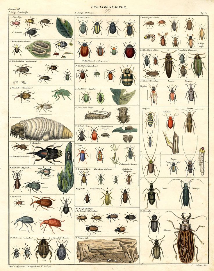 Beetle identification chart - Identifying insect eggs in the garden ...