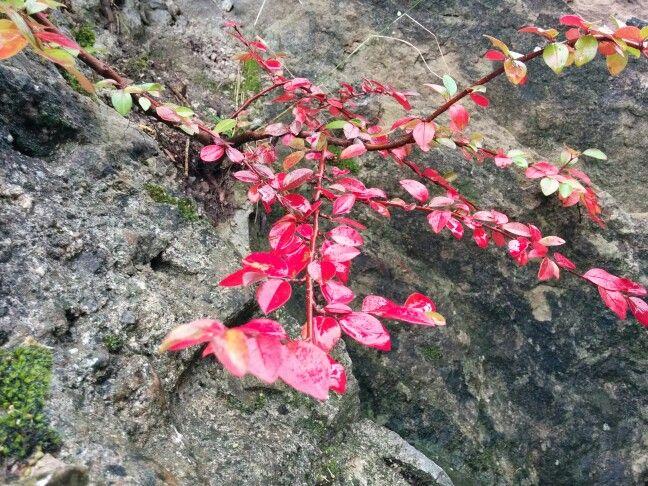 Mini-Baum an der Felswand. *** Tiny tree on the cliff.