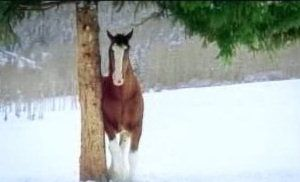 Christmas Horse Snowball Video