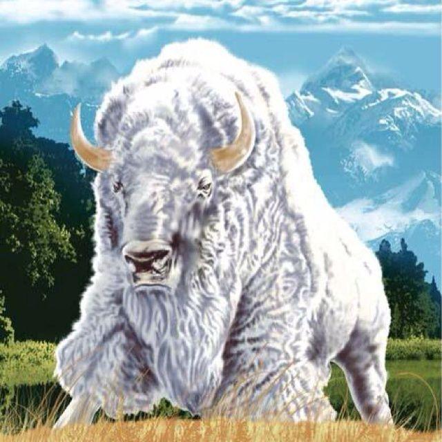 Great White Buffalo Native American Headdress Tattoo: Pinned By Rosemary Christiansen