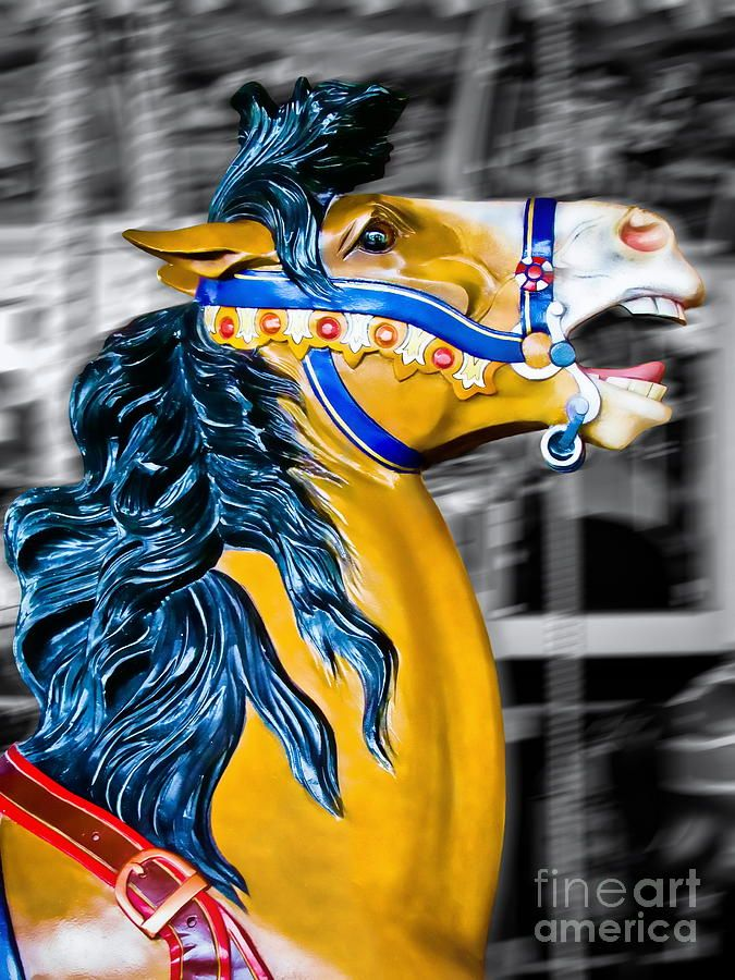 """Carousels...""""The Mane Event"""" ... Photography by Colleen Kammerer"""