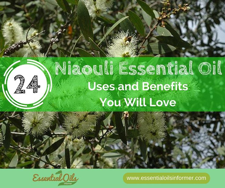 ∆ Niaouli Essential Oil... Niaouli Essential Oil Uses and Benefits