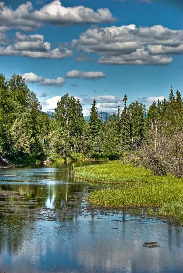 19 best heimo korth images on pinterest alaska for Anchorage alaska fishing charters