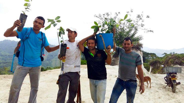 Ayudando a la conservación del medio ambiente en la Ciudad Perdida / Colombia!