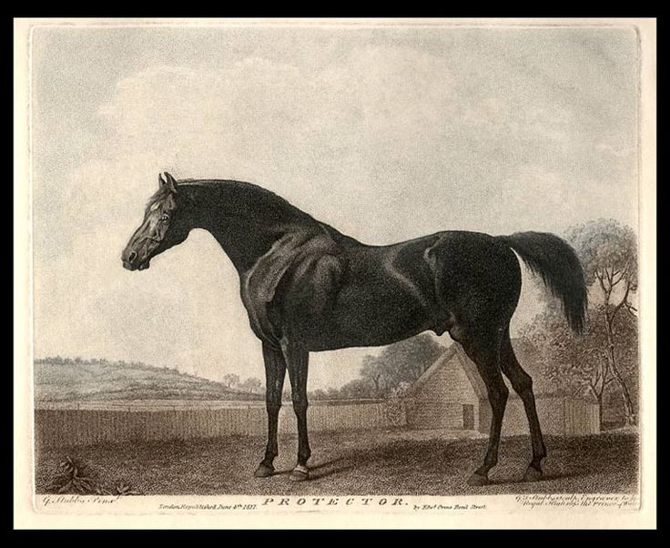 17 Best Images About Horseracing Thoroughbred Print On