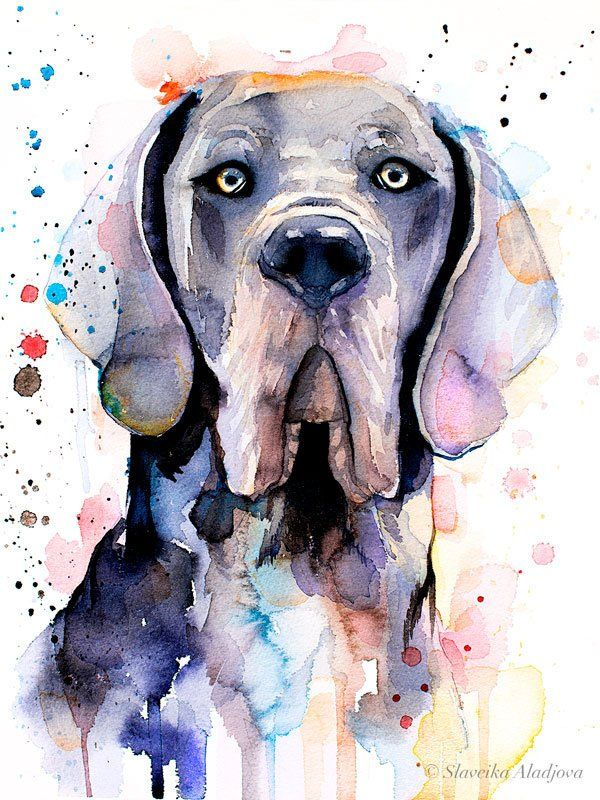 Blue Great Dane Watercolor Painting Print By Slaveika Aladjova