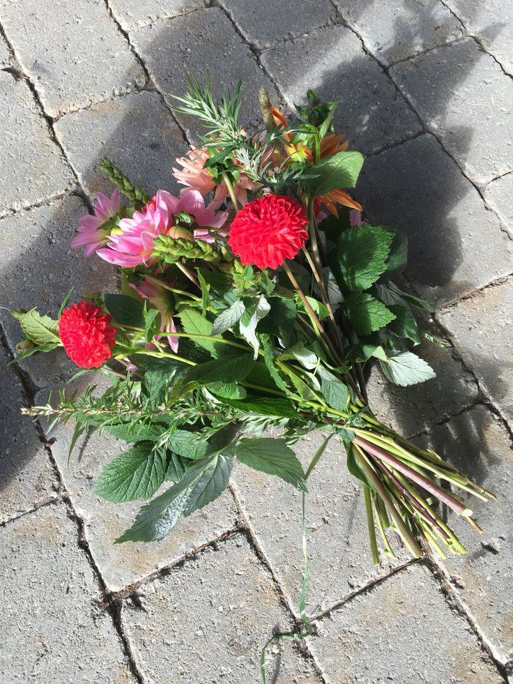 Organic dahlias, slowflowers, vildevioler.dk 2015