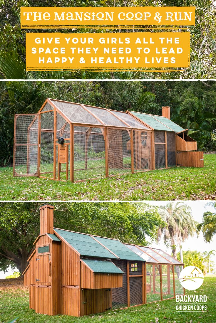 The Mansion Coop plus Mansion Run will provide plenty of safe space for your flock to forage. Your chickens will love bustling about within the large enclosure without having to worry about any predators lurking! Find out more about our Mansion Coop here, http://www.backyardchickencoops.com.au/chook-pens/the-mansion/ #loveyourchickens #mansioncoop #chickencoop