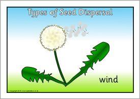 Affiches sur la dispersion des graines // Types of seed dispersal posters (SB3173) - SparkleBox