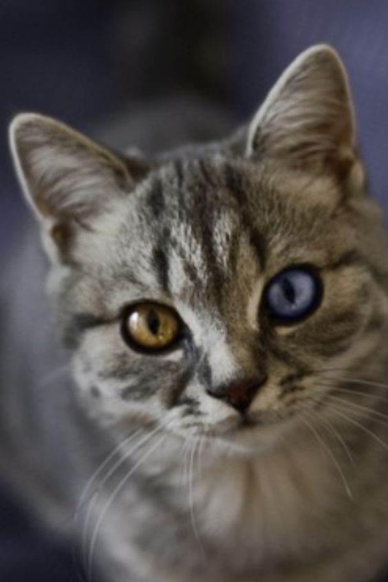 At What Age Do Kittens Eyes Change Color Kitten Eyes Dog Cat Pictures Cute Cats And Kittens