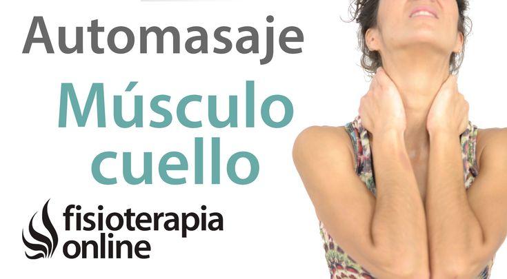 Auto-masaje para músculo esternocleidomastoideo. Relajar tensión cervical.